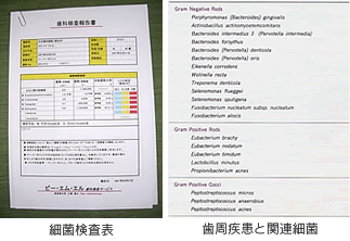細菌検査表・歯周疾患と関連細菌